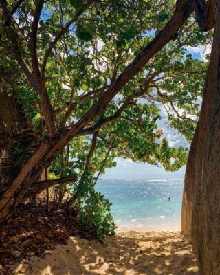 La Digue Island - 🌴 - Se volete saperne di più su questo meraviglioso paese, date un'occhiata agli articoli sul viaggio 🏝 -> link in BIO . . . #seychelles  #ladigue #seychellesbeach #seychelles🇸🇨 #shotoniphone #instaviaggio #traveler #travelblogger #beachescape #sunset #ladigueisland #paradise #seychelles_ig #lovefortravel