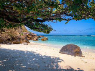Moyenne Island - 🌴 - Se volete saperne di più su questo meraviglioso paese, date un'occhiata agli articoli sul viaggio 🏝 -> link in BIO . . . #seychelles  #moyenneisland #seychellesbeach #seychelles🇸🇨 #shotoniphone #instaviaggio #traveler #travelblogger #beachescape #sunset #ladigueisland #paradise #seychelles_ig #lovefortravel
